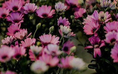 sezonsko cvetje